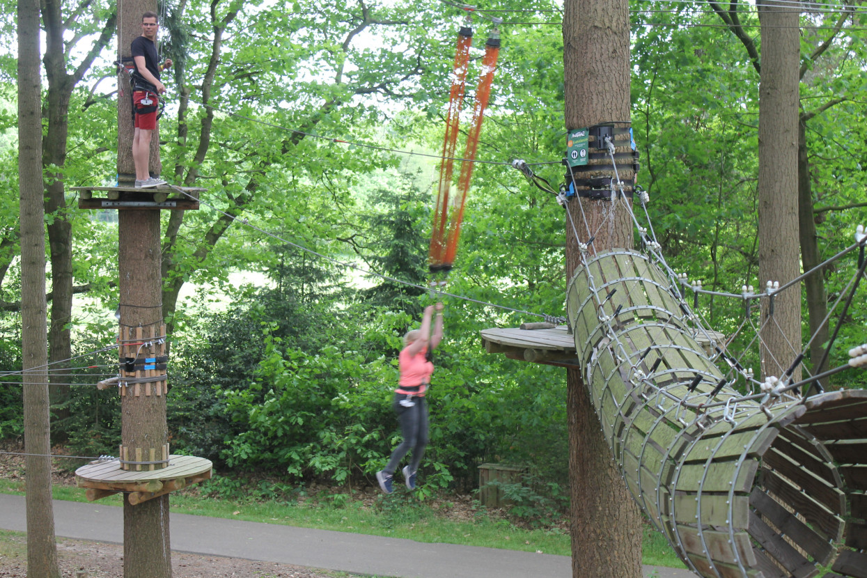 Climbing forest